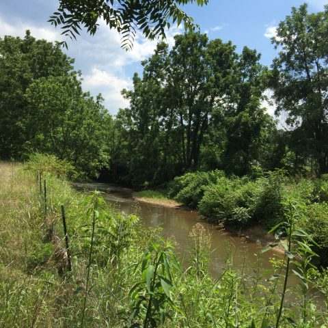 Regional Land Trust Hoping to Help Expand Local Greenway
