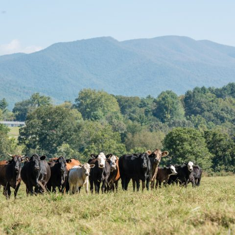 Hayesville Family Conserves Farm