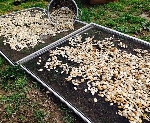 Public News Service: NC Land Conservancies Protect Heirloom Plants