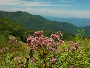 Wildflower Hike at Gibson Bottoms @ Mainspring's Gibson Bottoms Preserve