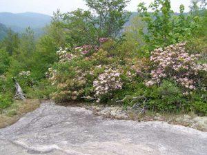Wildflower Hike at Panthertown @ Salt Rock Gap Parking Area
